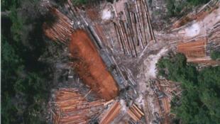 Au Cambodge, la déforestation fait des ravages.
