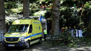 200-летний дуб рухнул на толпу людей во время праздника Богоматери Монте.