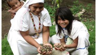 Des Indiennes arhuacas montrent les noix du Gaimaro.
