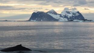 Nam Cực và loài cá voi lưng gù.