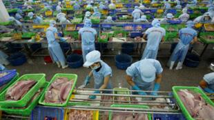 Tại một nhà máy chế biến cá của công ty thủy sản Biển Đông, Cần Thơ. Ảnh chụp ngày 07/07/2017.