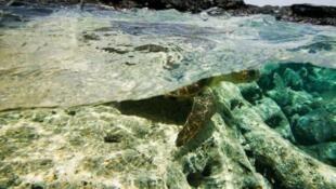 """Desde o 25 de Novembro e até esta sexta-feira, Cabo Verde organiza a segunda edição da """"Ocean Week"""" em São Vicente."""