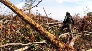 O desmatamento da Amazônia aumentou pelo menos 63% de agosto de 2014 a julho de 2015.