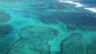The coral reefs around Lord Howe Island, NSW, Australia, are among the most southerly reefs in the world.