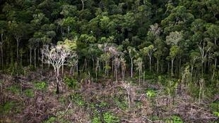 Os dados de desmatamento da Amazônia considerados pelo Brasil em suas estatísticas oficiais de perda de floresta e de emissões de gases de efeito estufa provocadas pela mudança no uso do solo podem estar sendo subestimados.