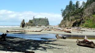 Cedar Creek, dans le Parc national olympique, situé dans l'Etat de Washington, aux Etats-Unis.