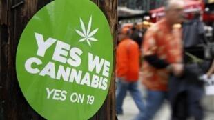 Autocollant de soutien à la proposition 19 légalisant le cannabis dans l'Etat de Californie (USA).