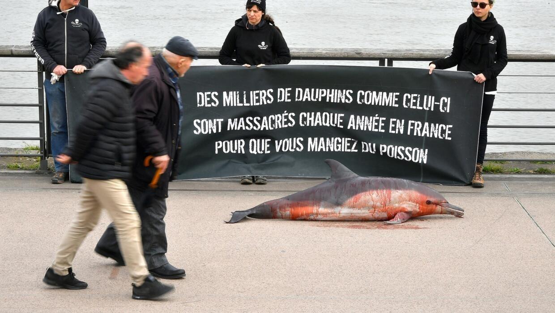 France: 600 dauphins échoués sur les côtes françaises depuis le début de l'année