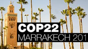 COP 22 à Marrakech.