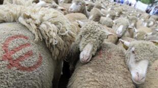 Agricultores franceses temem a concorrência da carne brasileira.