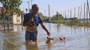 中國山東壽光遭洪水襲擊後一名男子在泛濫的街上趟水而過,身後跟着兩隻小豬。(2018年8月23日)
