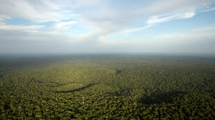 Une vue de la forêt amazonienne, au Brésil, dans l'État d'Amazonas, le plus grand du pays.