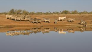 Des ânes photographiés pès de Bandiagara, au Mali, le 8 mars 2007.