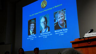 Os pesquisadores americanos Jeffrey C. Hall, Michael Rosbash e Michael W. Young