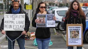 Ativistas protestam na França contra animais em circos.