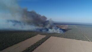 Dans la région du Chaco argentin, une parcelle de forêt part en fumée pour laisser place aux champs.