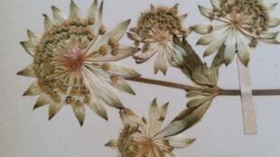 L'herbier de Lyon abrite de nombreuses collections. Celle du prince Roland Bonaparte est celle qui sera numérisée. Elle comprend 3 millions de spécimens.