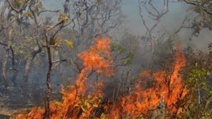 La forêt amazonienne brûle dans l'État du Mato Grosso au Brésil (image d'illustration).