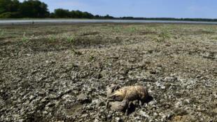 La sécheresse a accentué les effets de la canicule en juillet 2019, en Creuse, dans le centre de la France (Photo d'illustration).