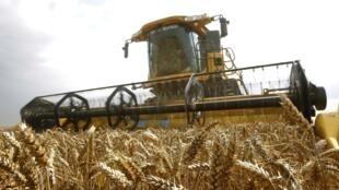 Safra de trigo este ano deve ser, pelo menos, 20% menor do que a produção habitual, segundo o governo russo.