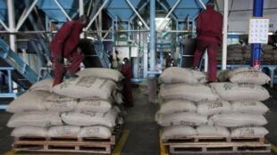 Des travailleurs dans un entrepôt de cacao d'Abidjan, le 4 octobre 2012.