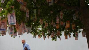 Notas de bolívares penduradas em uma árvore numa rua em Maracaibo, na Venezuela.