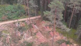 人类社会破坏森林加速