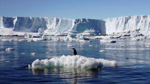Chim cánh cụt gần trạm Dumont d'Urville của Pháp ở Nam Cực. Ảnh chụp ngày 23/01/2010.