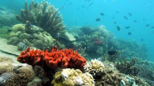Coraux de l'île Palawan aux Philippines.