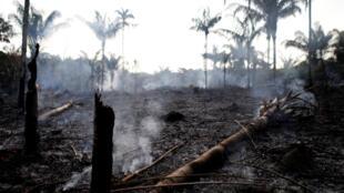 Nhiều vụ cháy ở rừng Amazon là do nông dân đốt rẫy lấy đất canh tác. Ảnh chụp tại Iranduba, bang Amazon, Brazil, ngày 20/08/2019.