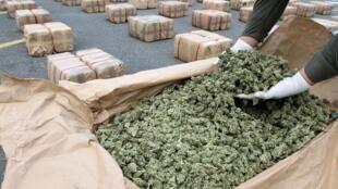 Marijuana ដែលប៉ូលិសរកឃើញនិងចាប់បាន មកពីប្រទេសកូឡុំប៊ី