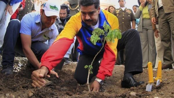 Venezuela's President Nicolas Maduro plants a tree at the Hugo Chavez mausoleum in Caracas