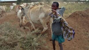 Un jeune Ethiopien et son troupeau de bovins près de Degahabur dans la région d'Ogaden.