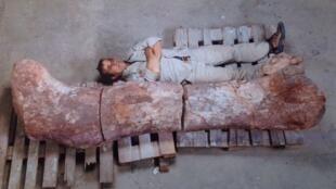 El fémur de dinosaurio, descubierto en Argentina, en una imagen difundida en la primera plana de la prensa local.