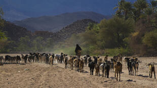 Fin décembre, les autorités béninoises avaient interdit la traversée de sa frontière par le bétail des éleveurs du Niger. (image d'illustration)