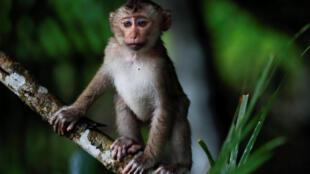 Макака в национальном парке Кхауяй в Таиланде. 18 июля 2016