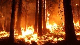 Пожар уже погубил 89 тысяч гектаров леса в Йосемитском национальном парке в Калифонии
