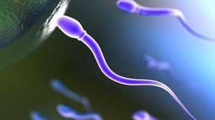 Ilustración de un espermatozoide tratando de introducirse en el óvulo.