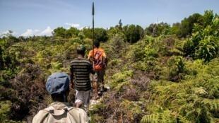 Des guides forestiers armés de pagaies ou d'arcs et de flèches patrouillent dans la forêt de Vohibola, à Madagasar. (image d'illustration)