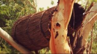 La miel de Tapoa es producida en el este de Burkina Faso por la etnia Gourmantché.