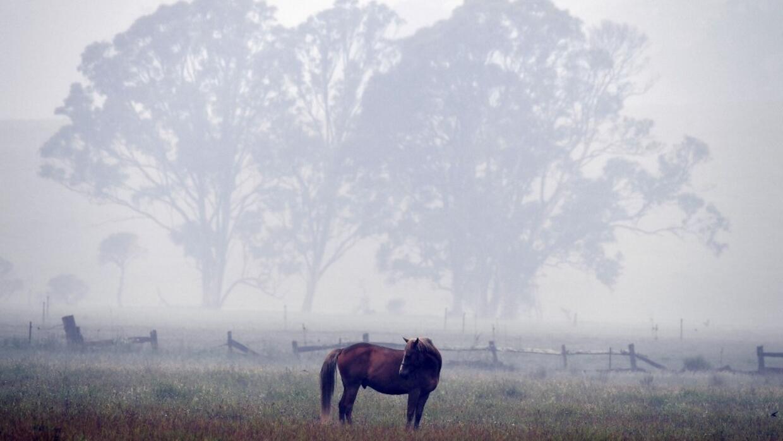 Chaleur et sécheresse: baisse inédite de la production agricole australienne