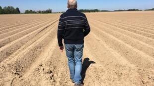 Alain Dequeker très inquiet arpente son champ de patates, situé non loin de Valenciennes.