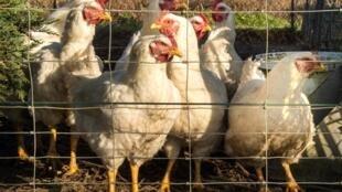 Активистам вменяют незаконное проникновение на фермы и кражу животных