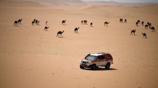 Este año el Rallye Dakar tiene lugar en  Arabia Saudita