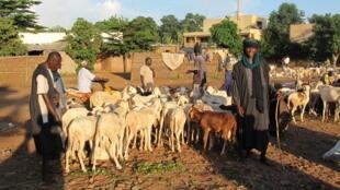Au Mali, des bergers peuls avec leurs animaux (image d'illustration). Dans le pays, il faut désormais faire renaître la confiance entre les différentes communautés.