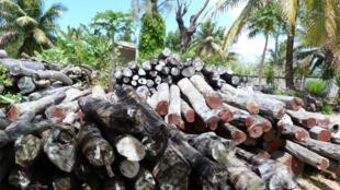 Bois saisis par les autorités et stockés dans la cour de la Direction régionale de l'Environnement et des Forêts à Antalaha (région SAVA, nord-est de Madagascar).