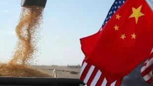 圖為中美貿易戰聚焦美國大豆圖片