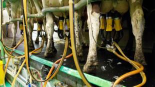Alimentos básicos, como la leche, también se racionan.