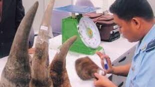 Tại Vệt Nam, một kílô sừng tê giác trị giá 60 ngàn đô la (DR)