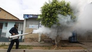 A municipal health worker carries out fumigation on a street as part of the city's efforts to prevent the spread of the Zika virus